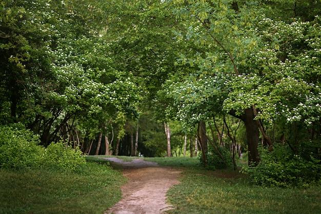 夏の公園の路地
