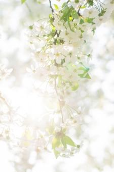 Цветок удлиненного дерева