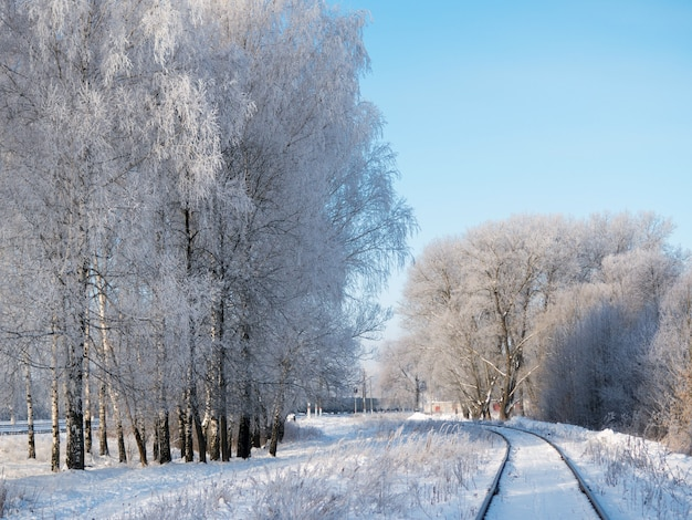 Морозное зимнее утро. красивый снежный пейзаж березы