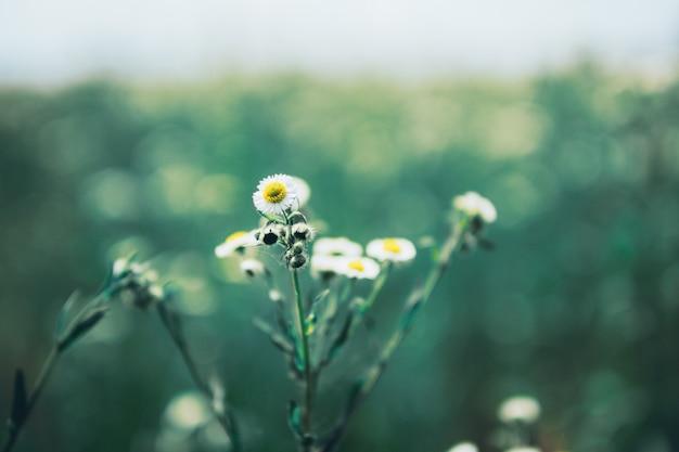 Красивое природное ромашковое поле