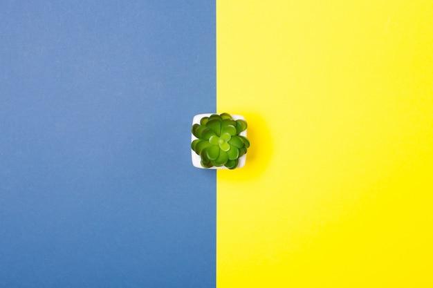 対照的に明るい青と黄色の背景に小さな植物。無料のコピースペース。最小限の創造的なコンセプト。