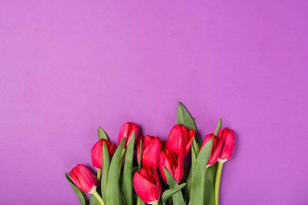 紫色の背景に美しい赤いチューリップ。母の日おめでとう。テキストのためのスペース。グリーティングカード。こんにちは春のコンセプト。グリーティングカード。休日のコンセプトです。コピースペース、トップビュー。お誕生日。スペースをコピーします。上面図