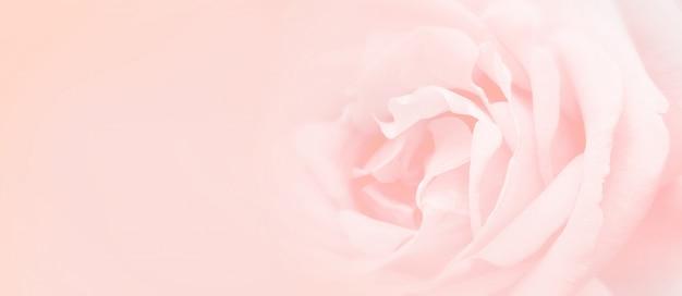 柔らかさピンクのバラの背景。