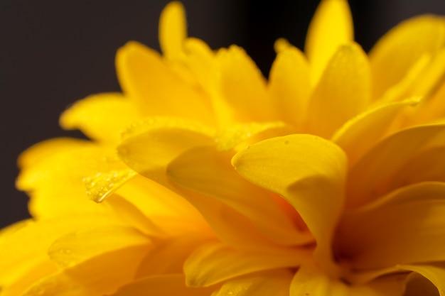 Макро фотография желтого цветка