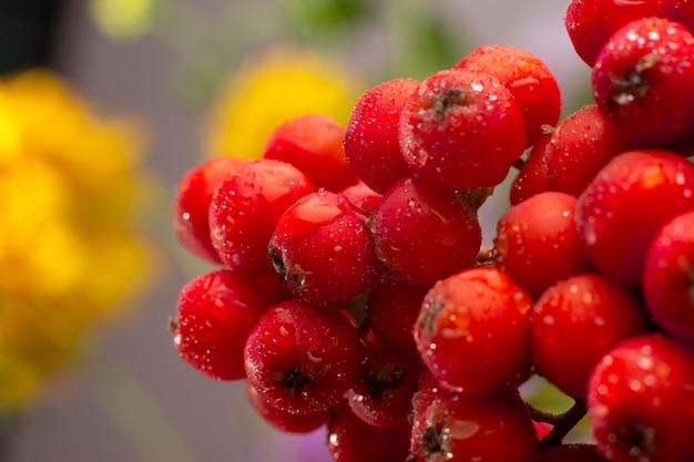 ローウェンの果実を積んだナナカマドの木の枝にクローズアップ