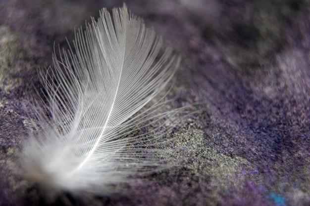 羽のテクスチャ、白いふわふわくるくる