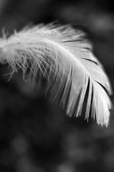 分離された単一の白い羽