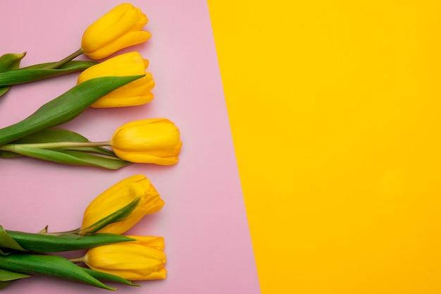 黄色ピンクの背景に黄色のチューリップの花。春を待っています。幸せなイースターカード。フラット横たわっていた、トップビュー。テキストのスペースをコピー