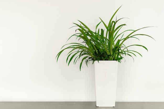 オフィスのコピースペースと白い鍋に緑の植物
