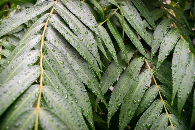 黒い背景に水滴と緑の葉