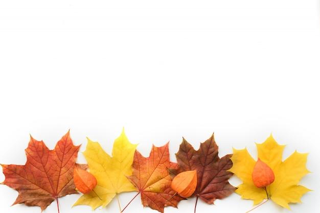 カエデの葉とサイサリスのフレームの秋の組成。フラット横たわっていた、白い背景の上のトップビュー