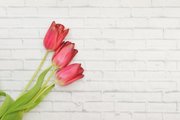 Красные цветы тюльпаны на белом фоне стены из кирпича