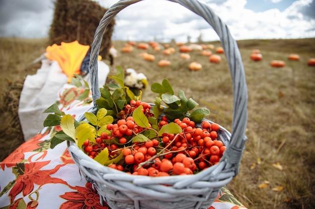 フィールド内のバスケットの赤い果実。秋の収穫