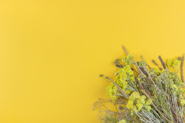 Желтые цветы на желтом фоне. минимализм. квартира лежала.