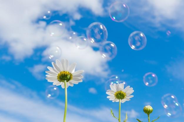 明るい雲と青い空を背景にカモミール。シャボン玉が空中を飛ぶ。