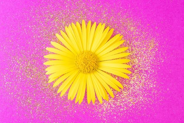 Желтая ромашка с золотыми блестками крупным планом на ярко-розовом фоне.