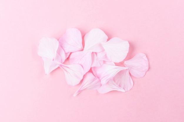 ピンクのゼラニウムの花びら。