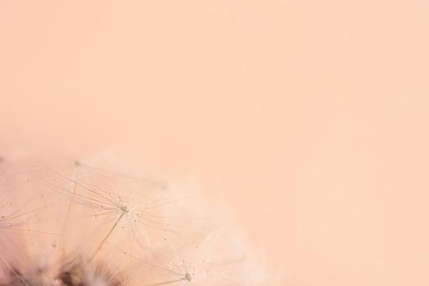 色付きの背景にタンポポの種のクローズアップ
