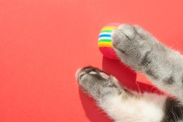 赤の背景に丸い小さなボールと灰色の猫の足。ペット用おもちゃのコンセプト