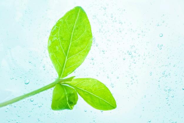 上部の化粧用半透明ジェルは新緑の葉です。