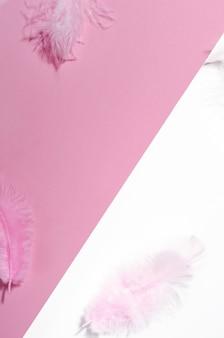 Розовый белый фон с цветными перьями вид сверху.