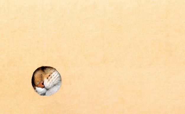 Кошка смотрит из коробки. кошачий нос в круглой дыре.