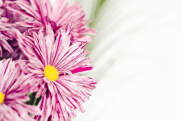 白い背景の上の緑の葉のクローズアップと花束の菊のピンクの花。