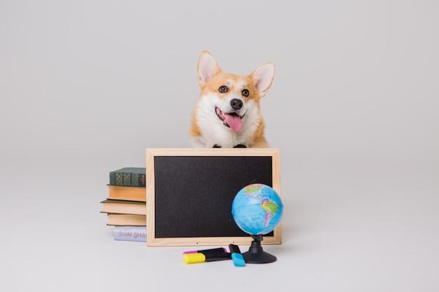 Вельш-корги-пемброк с книгами и пустой чертежной доской, концепция школы