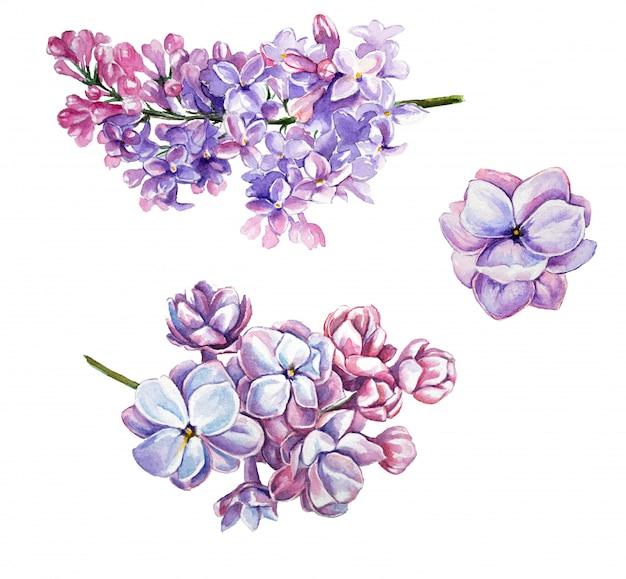 水彩ライラッククリップアートセット。白で隔離されたライラックの花
