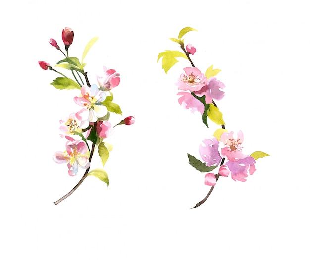 水彩の手描きの花の枝が白で隔離
