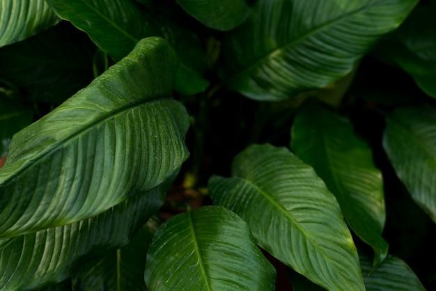 創造的な熱帯の緑の葉のレイアウト。