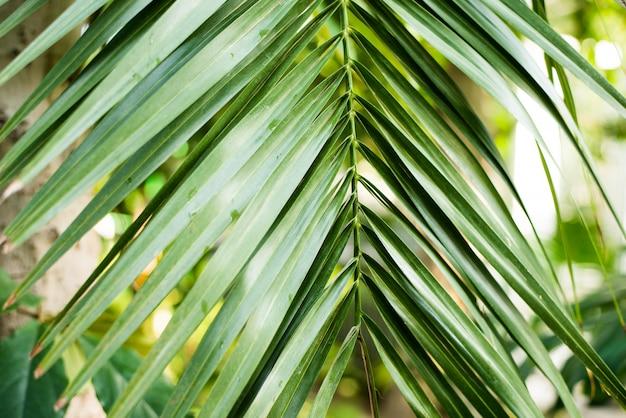 Креативный макет природы из тропических листьев и цветов