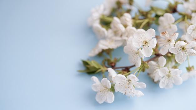 自然の花春の背景。