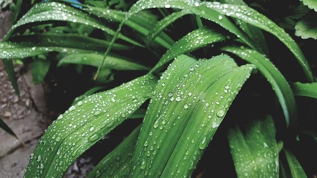 Капли росы на ярко-зеленых листьях