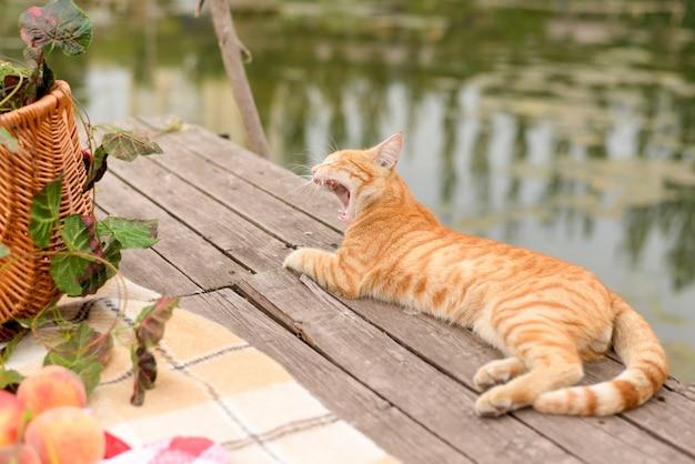 ピクニックに面白い猫。美しい夏の日