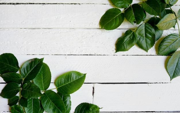 白い木の緑の葉のフレーム。コピースペース