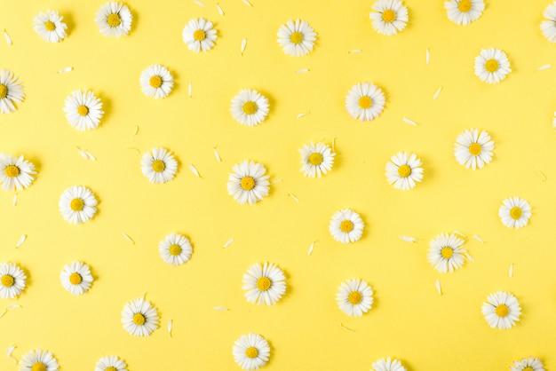 Композиция цветов. цветы ромашки на пастельно-голубой