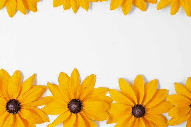 Желтые цветы представлены на белом фоне. много цветов для украшения любой открытки или праздничной открытки. лето и осень концепция. плоская планировка, вид сверху, копия пространства