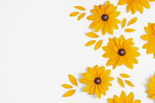 白い背景の上に表される黄色い花。ポストカードやお祝いカードを飾るための多くの花。夏と秋のコンセプト。フラット横たわっていた、トップビュー、コピースペース