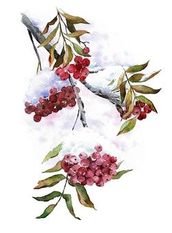 果実に雪で野生の灰の枝。冬の赤いアッシュベリー。水彩イラスト。