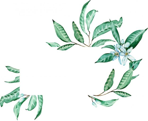 緑の熱帯フレーム。みかんの花と葉のテンプレート。水彩イラスト。