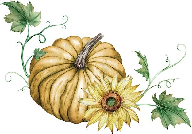 オレンジ色のカボチャと緑の葉と黄色のヒマワリの水彩イラスト