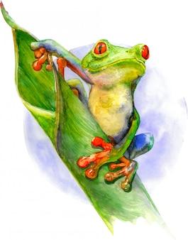 赤い目と緑の葉の上に座って指で緑のカエル。