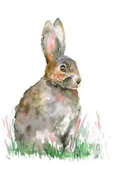 緑の芝生の上の灰色のウサギ。イースターのウサギ白い背景で隔離されました。水彩イラスト。