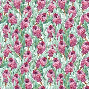ピンクのプロテア花水彩イラスト。白い背景の上のシームレスパターン設計。