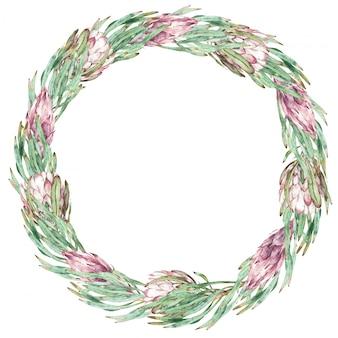 丸いピンクのプロテアと緑の葉のフレーム。水彩のエキゾチックな花のイラスト。