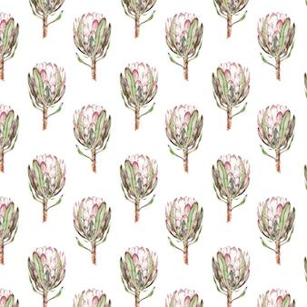ピンクのプロテア花水彩イラスト。