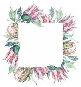 スクエアピンクのプロテアフレーム。水彩のエキゾチックな花のイラスト。