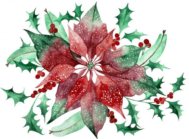 クリスマスの花の装飾が施された水彩画のポインセチア。手描きの伝統的な花と植物