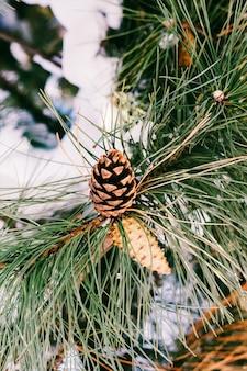 冬の雪の円錐形の松の枝。下からの拡大図。着色写真
